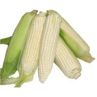 maize-white