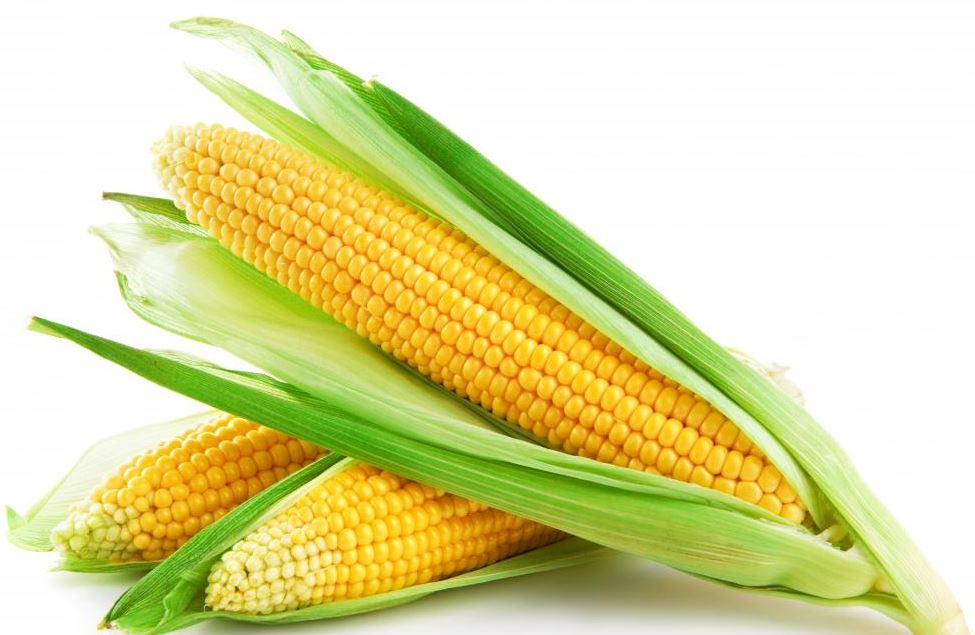 maize flour south africa